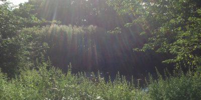 Tailor Made Resources Suffolk sun